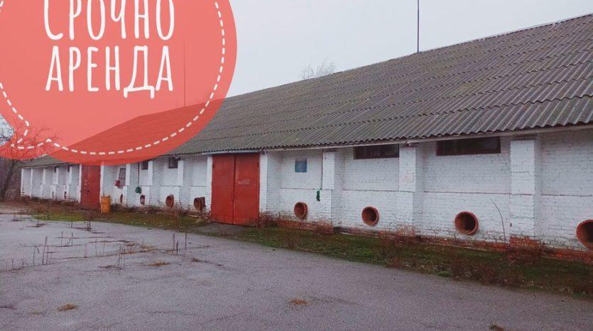 Rent - Dry warehouse, 10000 sq.m., Nizhyn